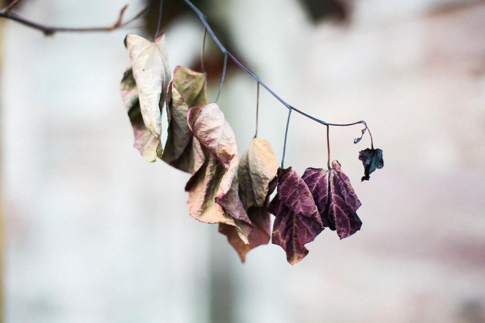 AutumnatLowther-108